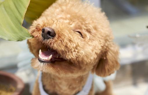perro rie