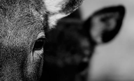 sentir empatia por los animales